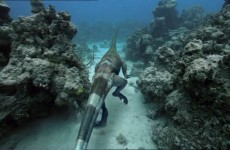 Τα πιό φονικά αρπακτικά του ωκεανού