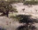 Κυνηγοί και θηράματα